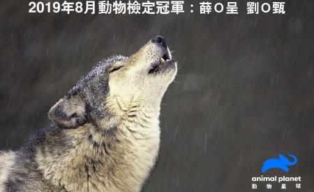 動物檢定8月冠軍