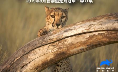 動物星球頻道《動物檢定》9月冠軍出爐