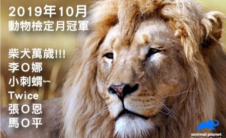 動物星球頻道 《動物檢定》10月冠軍出爐