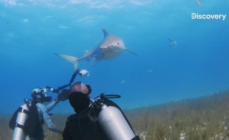 Discovery《鯊魚週》帶觀眾體驗史上最極端危險鯊魚實驗、追蹤傳奇巨鯊 鯊魚竟對人血無感? 水花宛如鯊魚的晚餐鈴? 尋找史上巨鯊「深藍」 驚見大白鯊吃了大白鯊
