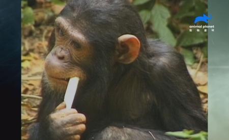 自然怪事求解答 破解大自然奇特現象 亞特蘭提斯再現?巴西雨林神秘沒入水中 大象是老菸槍?印度科學家驚見大象詭異舉動 《自然怪事求解答》新系列,動物星球頻道 每週六晚間8點首播