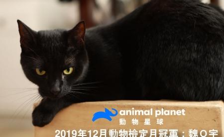 動物星球頻道 《動物檢定》12月冠軍出爐