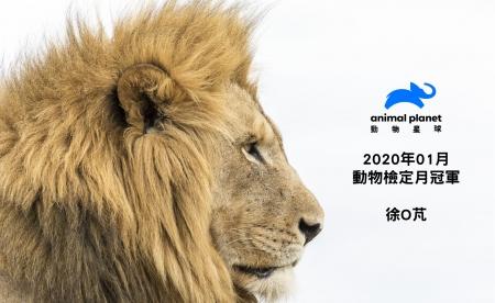 動物檢定2020年1月冠軍